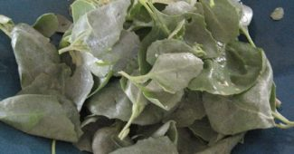 fresh-saltbush-leaves